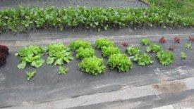 Hoe planten zetten in worteldoek