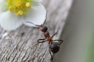 Beste manier om mieren te bestrijden