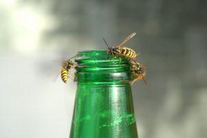 Wespenvanger vullen