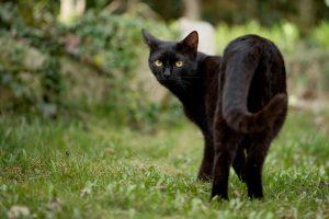 Katten gebruiken tuin als kattenbak