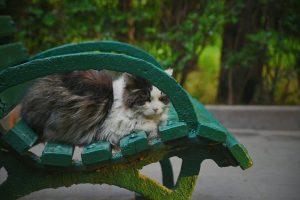 Katten op tuinkussens voorkomen