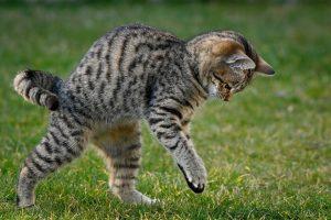 Katten poepen en plassen op gazon