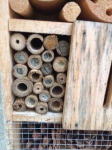 Insectenhotel bewoond